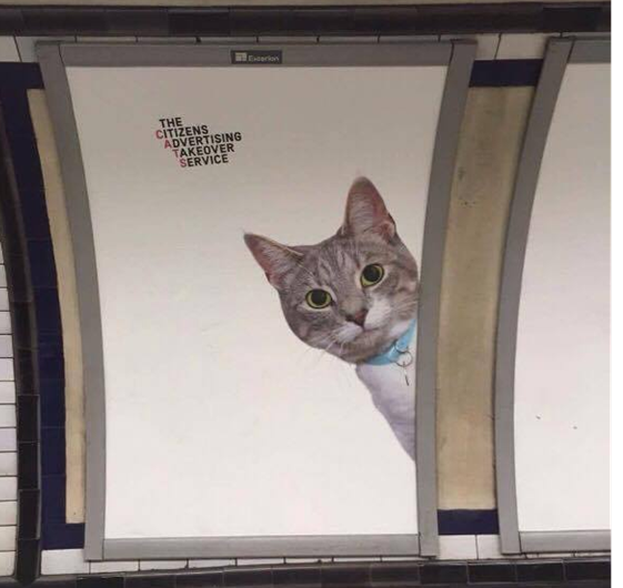A London tube station is overrun by cats
