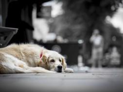 sad-dog-1468499490ouT